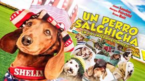 Un perro salchicha en las internacionales